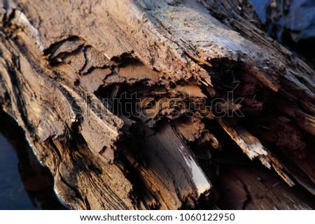 broken drift wood deep brown #1060122950