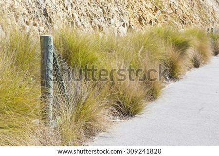 broken fence with old dry long grass along a cement pathway