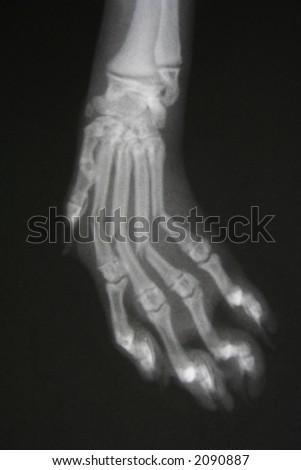 broken hand / paw