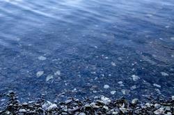 broken oyster shell beach in Washington State