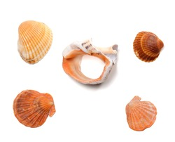 Broken rapana and seashells isolated on white background. Top view.