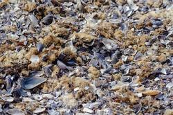 Broken Sea Shells on the Beach