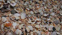 Broken seashells shells on beach texture background