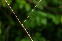 Broken spider's web on dried-out plant-stalk.