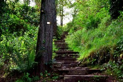 Broken stairs in a forest, made out of stone. The stairway goes up to the bright top of the mountain.