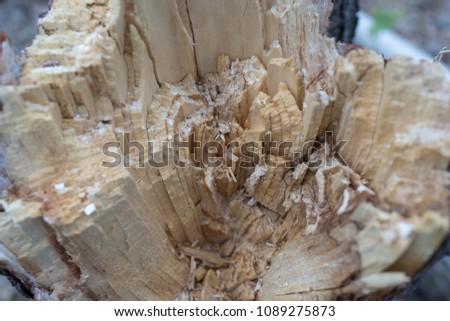 broken tree close up #1089275873