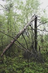 broken tree in the woods