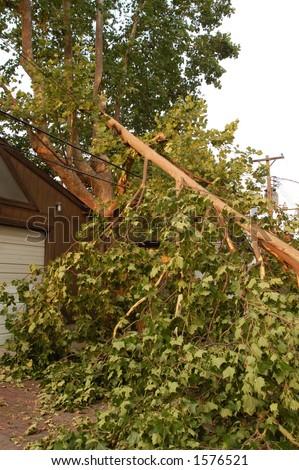 Broken Tree on Power Lines, St. Louis, Missouri - stock photo