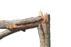 Broken tree stem after passed heavy win force
