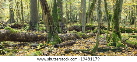 Broken trees almost decomposed in natural european forest