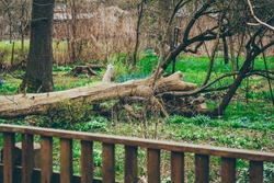 broken trees in the city park after a gale