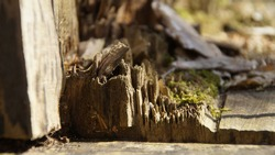 Broken treetrunk full of moss