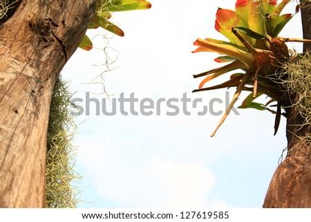 Bromeliad and Spanish Moss on Tree