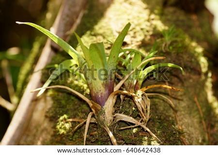 Bromeliads in cloudforest. Costa Rica, Alajuela Province, Central Cordillera, Poas Volcano National Park
