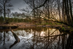 Brook at Leudal, close to Heythuysen, Northern Limburg. Sun reflected in a brook. Landscape in the Netherlands.