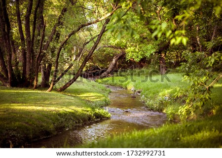 Photo of  brook in the forest on a sunny day