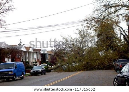 BROOKLYN, NY -OCTOBER 30: Fallen tree in the aftermath of Hurricane Sandy on October 30, 2012 in Brooklyn, NY