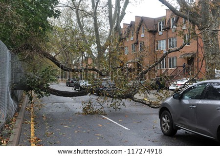 BROOKLYN, NY - OCTOBER 30: Fallen tree in the Sheapsheadbay neighborhood due to flooding from Hurricane Sandy in Brooklyn, New York, U.S., on Tuesday, October 30, 2012.