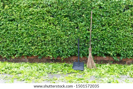 Broom and dustpan  Placed in front of the trim branches waiting to be cleaned up