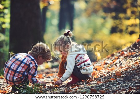 Brother and sister camping in autumn forest. Children pick acorns from oak trees. Little boy and girl friends have fun on fresh air. Childhood and child friendship. Kids activity and active rest.