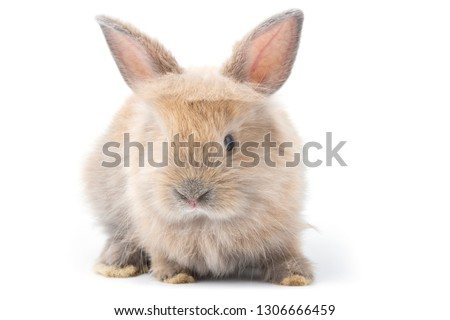 Brown adorable baby rabbit on white background.