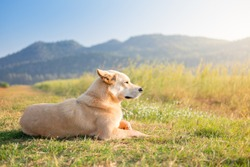 Brown adorable smart dog sitting in pleasant farm field country road with grass and mountains added ambient light