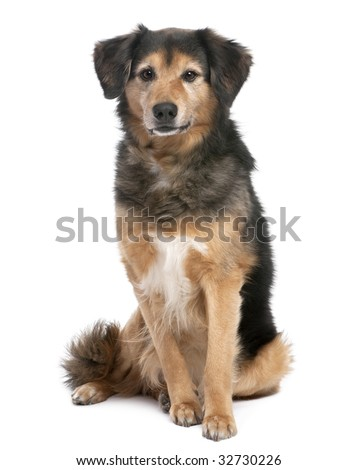 brown and black Mixed-Breed Dog sitting and facing at the camera (11 years old) in front of a white background