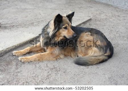 Black dog lying on back - photo#26