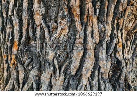 brown and gray bark of old oak. close-up of an interesting pattern #1066629197
