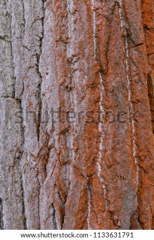 Brown and grey tree bark #1133631791