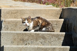 Brown-and-white cat resting on stone stairs in a picturesque village in the Lavaux wine region along Lake Geneva, western Switzerland.