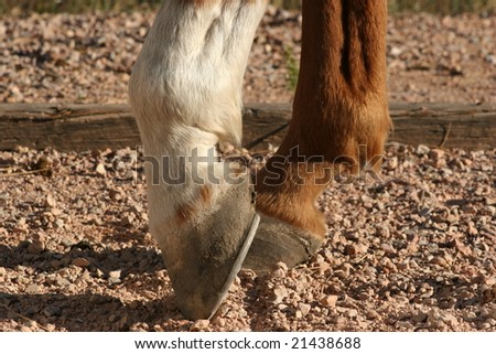 brown and white horse hooves