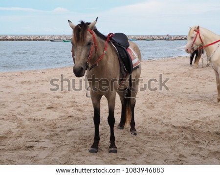 Brown and white horses on Cha-am beach for rent, Petchaburi, Thailand