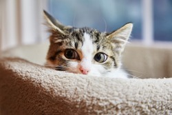 Brown and white tabby kitten is hiding in a cat bed