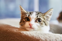 Brown and white tabby kitten sitting in a  cat bed and looking toward the camera