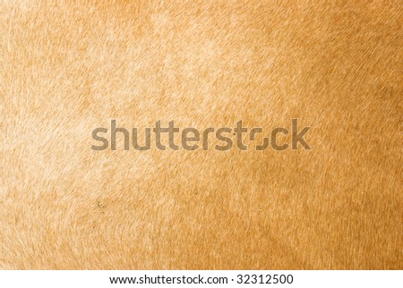 brown animal fur texture