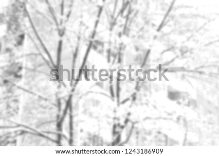 brown bare tree trunk with lots of curly beautiful long branches #1243186909