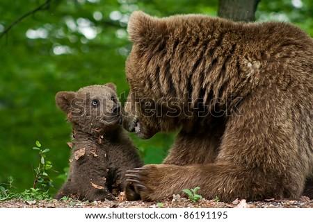 stock photo brown bear and cub 86191195 - Каталог — Фотообои «Животные»