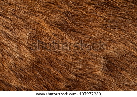 Brown Bear Coat. Real Brown Bear Fur Closeup Photography.