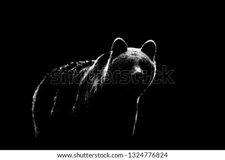 Brown bear contour on black background. Bear contour in black and white. #1324776824