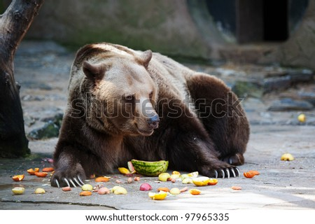 Brown bear eating fruit in ZOO - stock photo