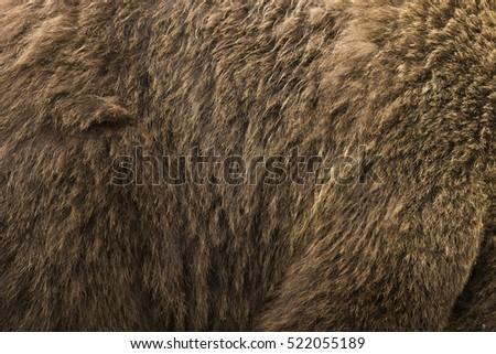 Brown Bear fur #522055189