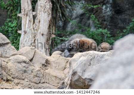 brown bear in zoo, digital photo picture as a background