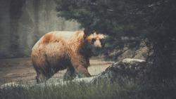 Brown bear lurking behind a tree
