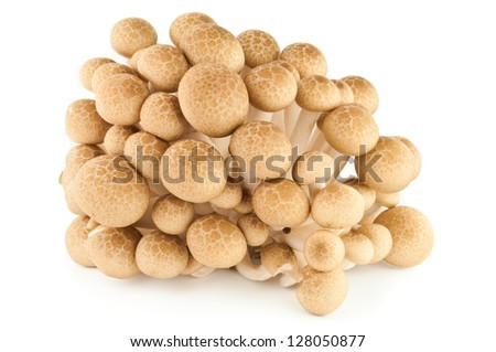 Brown beech mushrooms or Shimeji mushrooms isolated on white background