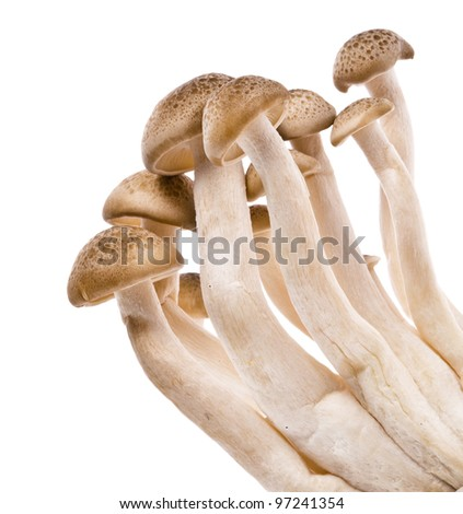 Brown beech mushrooms, Shimeji mushroom, Edible mushroom isolated on white background