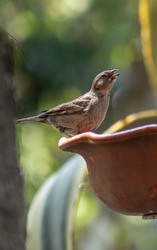 Brown bird with long beak