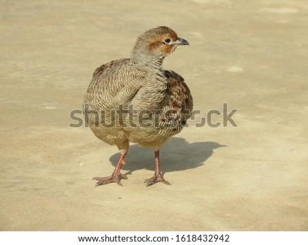 brown birds brown clay good combinations