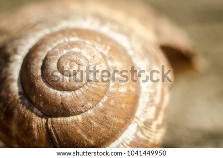 Brown broken and empty snail shell laying on the ground in the middle of a garden on a late winter. Spring is coming, animals and nature awakening. First sunny day after a long and cold winter