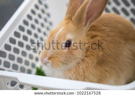 Brown bunny sit in white basket at pets' corner. Selective focus #1022167528